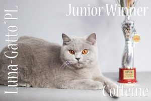 Junior Winner